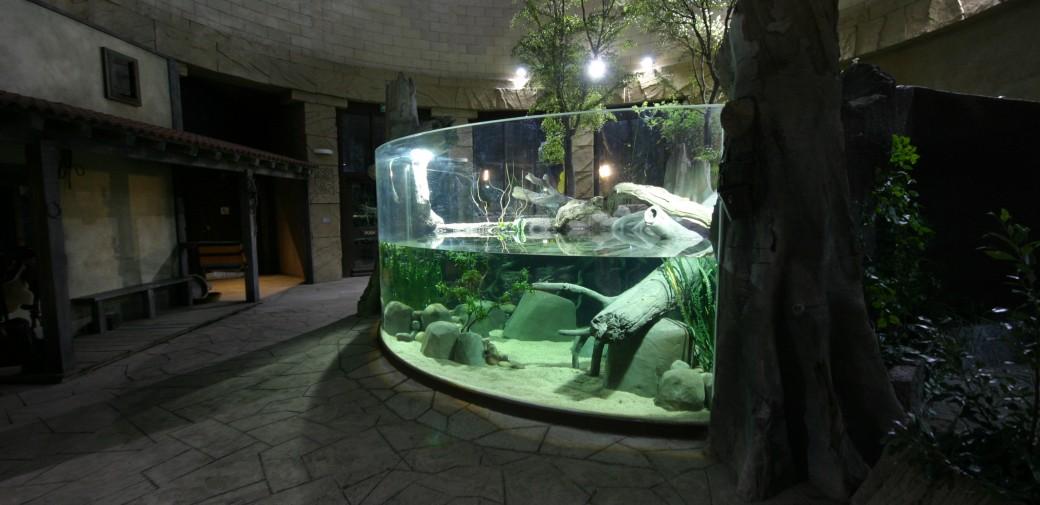 Nautilus Chester Zoo Spirit Of The Jaguar