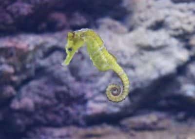 SEA LIFE Maldives & Seahorse Feature