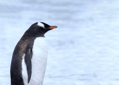 SEA LIFE Penguin Ice Adventure