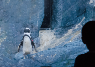 SEA LIFE Penguin Enclosure