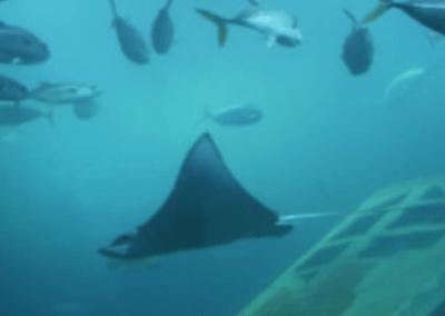 National Marine Aquarium Walrus Plane