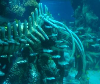 SEA LIFE Complete Refurbishment