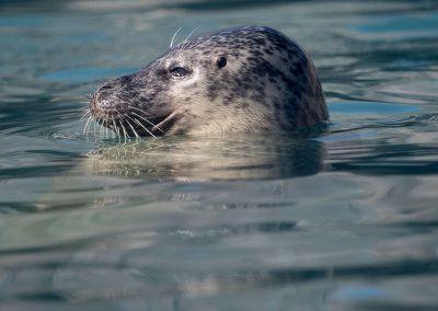 SEA LIFE Seal Pool