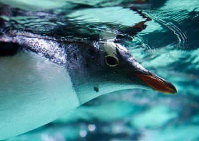 OCEANWORLD Penguin Enclosure